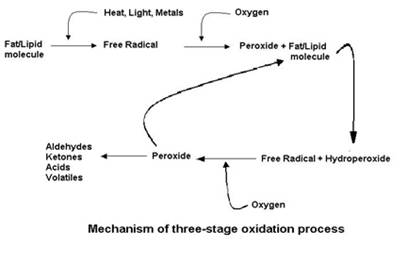 Oxidation Reaction